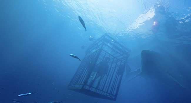 47 метров - Страшные фильмы про акул