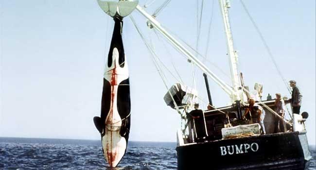 Смерть среди айсбергов - Страшные фильмы про акул