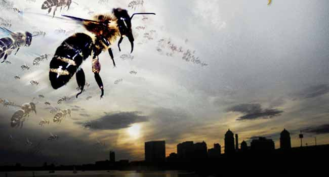 Страшные фильмы про насекомых